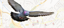 "Local Listings That ""Fly"": What You Should Know About the Pigeon Algorithm Update"
